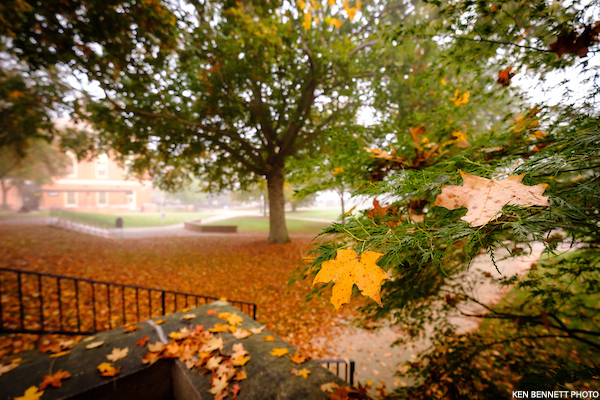 Leaves falling on campus on a misty fall morning (Nov 2020)